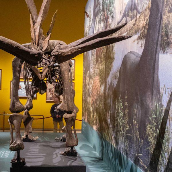 Dinodag Stegosaurus in Teylers Museum Haarlem
