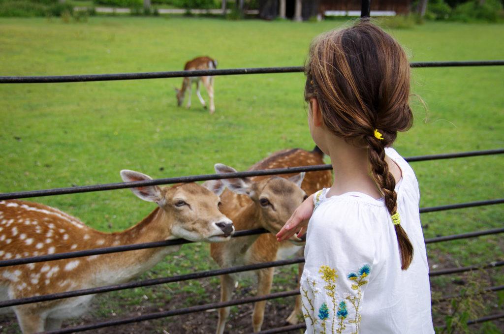 Elswout herten wandelen met kinderen Overveen Haarlem