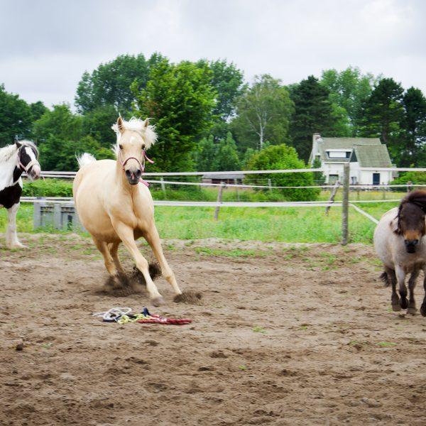 Eva_10 - rennende paarden 1