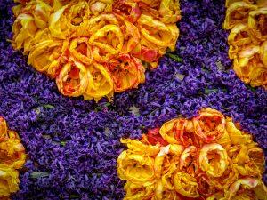Paarse en oranje bloemen tijdens Bloemencorso
