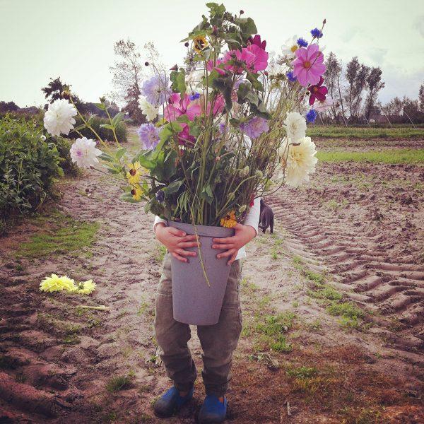 Frederiek_Annemiekes Pluktuin zomerbloemen