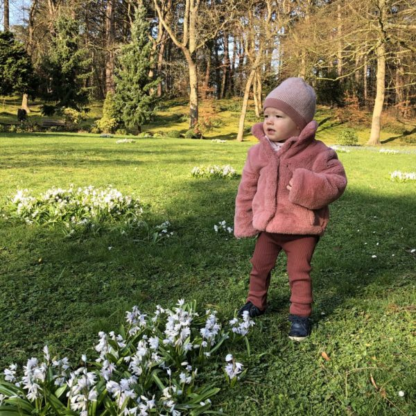 Bloemetjes in het voorjaar