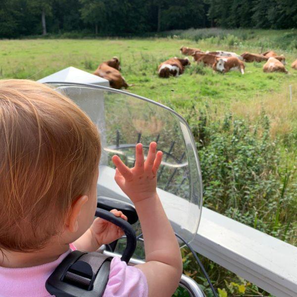 Kinderboerderijen in en rond Haarlem