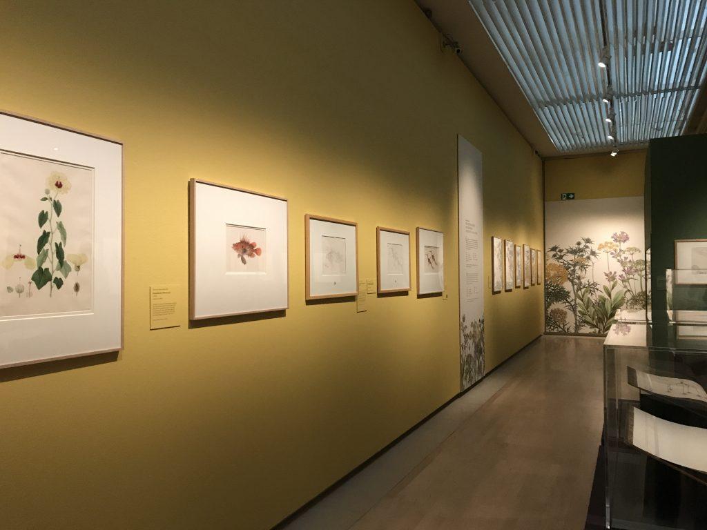 200 soorten groen exhibition at Teylers Museum