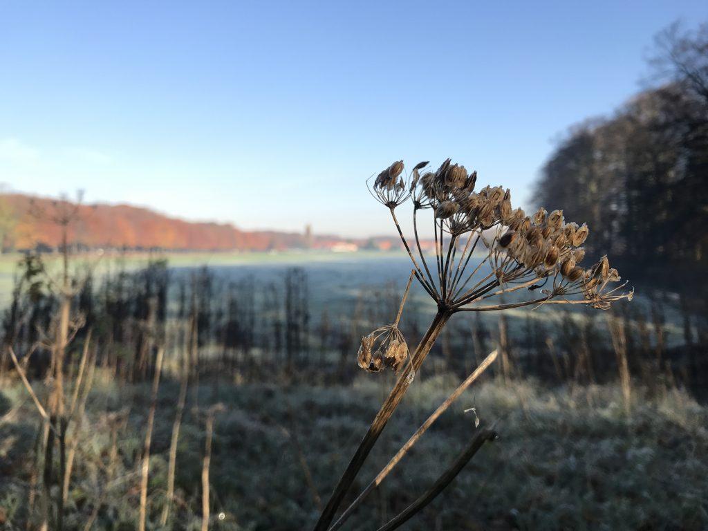 Elswout in de herfst zicht op Overveen