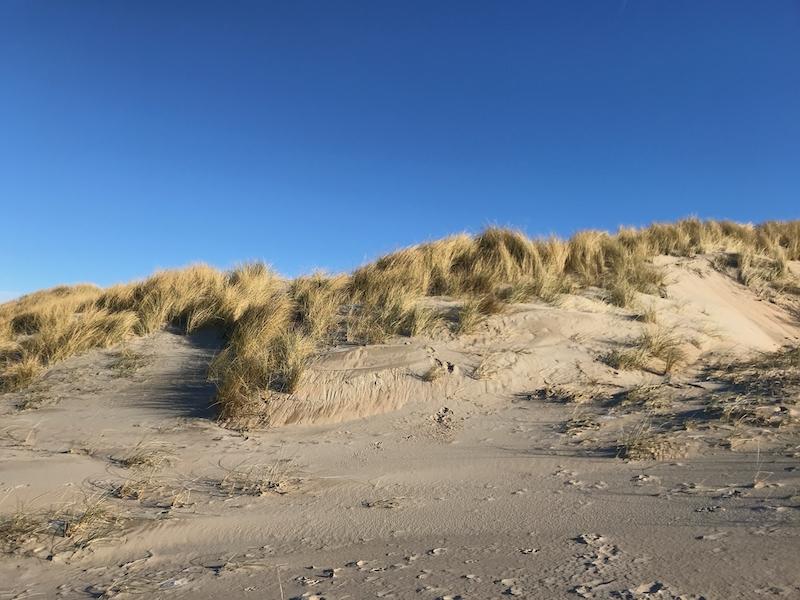 NvS_sleeen in de duinen bij Parnassia