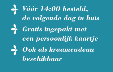 verzending mugjes Haarlem